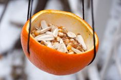 Making a bird feeder out of an orange peel eliminates the need for excess plastic and packaging. Reduce waste!