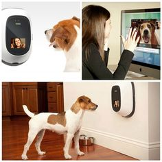 """""""PetChatz""""..... wait I totally want this.  You can video chat with the dog AND it releases a treat for your pup when you tell it to! <3"""