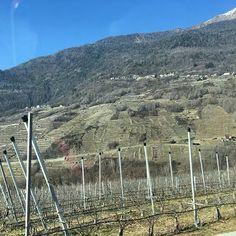 Nekonečné lány vinic a ovocných sadů i na těch nejnemožnějších místech... #hory #mountains #italy #🇮🇹 #fruits #trip #🍇 #🍎 Trip, Lany, City Photo, Garden, Instagram, Garten, Lawn And Garden, Gardens, Gardening