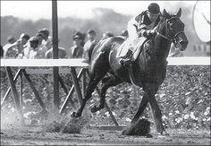Kentucky Derby winner War Admiral