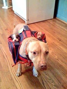 """""""First time riding the bus to school and I've got to say it's AWESOME."""" 