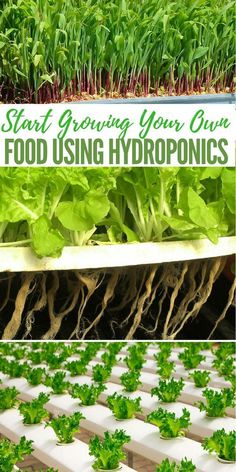 Hydroponic gardening or hydroponics is the science of growing plants using only nutrient-rich liquid as a soil replacement. Learn about hydroponics here. Hydroponic Farming, Hydroponic Growing, Aquaponics System, Hydroponic Systems, Hydroponic Solution, Diy Hydroponics, Aquaponics Greenhouse, Permaculture, Plant Growth