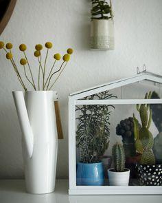 Na internetu je k dispozici obrovské množství informací o tom, jak pěstovat pokojové květiny, že to hravě zvládne každý