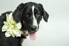 Sylvia Elzafon's Incredible Shelter Dog Series (PHOTOS)