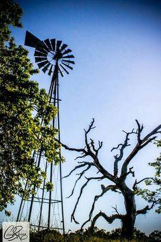 Texas Photography by Imagine that photography by carol ramirez http://imaginethatphotographybycarol.com