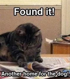 Funny Animal Pictures Of The Day - 45 Pics