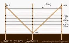 Plans for the best tomato trellis ever plus 12 Secrets to Growing Better Tomatoes from Creative Green Living