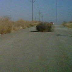 West Texas Tumbleweed - nothing pretty here. That's why most people want to leave Odessa with a quickness! Texas Texans, Texas Cowboys, Texas Tech, Texas Tumbleweed, Fun Facts About Texas, Texas Quotes, Only In Texas, Visit Texas, Lubbock Texas