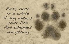 Dog quote about life