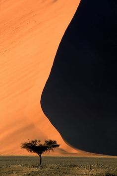 Sossusvlei, Tree Dune - Namibia
