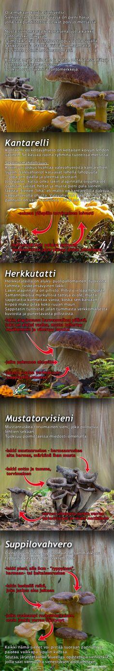 Sieniopas metsään mukaan!  #Sienestys  #Suomiretki