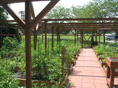 Community College Garden