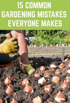 Common Garden Plants, Veg Garden, Garden Care, Easy Garden, Vegetable Gardening, Container Gardening, Garden Shrubs, Garden Oasis, Flower Gardening