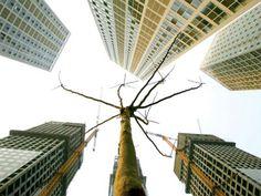 """每年的9月和10月是大陆楼市销售的旺季,在中共央行8月底再次降息、降准后,大陆业内人士普遍看好降息、降准后的房地产市场,但也有大陆经济人士表示,楼市""""救市""""政策越频发,反而说明当前楼市形势越严峻,未来楼市面临的问题越多,大陆楼市2016年初或将进入新一轮萧条。 - 中国经济"""