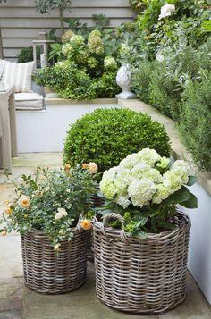 Back Gardens, Small Gardens, Outdoor Gardens, Plantas Indoor, Front Yard Landscaping, Garden Inspiration, Garden Pots, Container Gardening, Container Houses