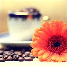 Gerbera Kaffeebohnen