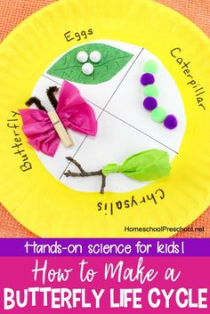 It's spring! It's a great time to learn about the life cycle of a butterfly. This spring craft for kids will help little ones visualize the butterfly life cycle. #homeschoolprek #homeschooling #preschool #springcrafts #butterfly #lifecycle #kidscrafts #paperplatecraft   https://homeschoolpreschool.net/life-cycle-of-a-butterfly-craft/