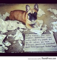 Dogs with Notes: The best of Dog Shaming (50 Funny Pictures) |