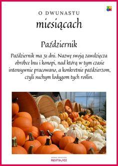 Pumpkin, Education, School, Europe, Pumpkins, Squash, Onderwijs, Learning