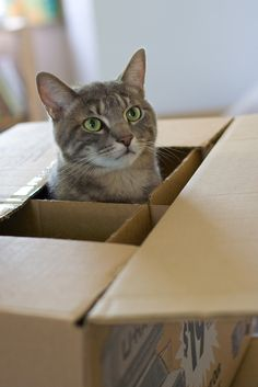 Ever wondered how to make moving with cats less stressful? Join our guest blogger from Play With Meow to find out how she does it! http://www.sopurrfect.com/2017/04/moving-to-a-new-home-with-your-cat/