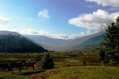 Krajobraz Gangtey