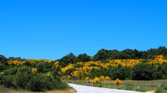 PhotoFriday :: Road Trip! | On the road to Chaves, Estrada Nacional 103 :: Portugal (02.06.2015)