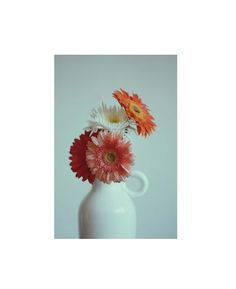. Colorful Flowers, Nice, Photography, Shopping, Decor, Monsters, Flowers, Fotografie, Dekoration