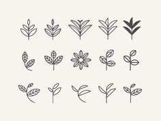 Leaf exploration for an organic tea re-branding I've been currently working on.     Finalized leaf is here.: