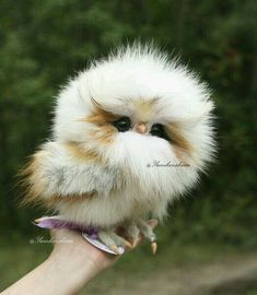 16 Adorable and Ultra Fluffy Animals Will Melt Your Heart - I Can Has Cheezburger? and pets 16 Adorable and Ultra Fluffy Animals Will Melt Your Heart Owl Pictures, Baby Animals Pictures, Cute Animal Pictures, Funny Pictures, Hair Pictures, Baby Animals Super Cute, Cute Little Animals, Funny Owls, Cute Funny Animals
