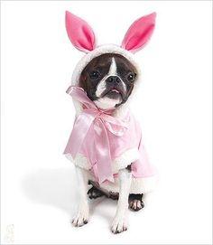 Bunny Costume Pink Bunny Costume 6ec7b3274af0