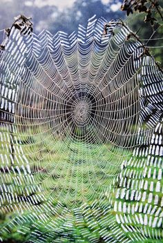 Spiders web/Home   meticulously made...