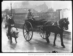 Animaux apprivoisés de Mr Wingfield à Ampthill [homme assis sur un cochon sellé passant à côté d'un cheval attelé] : [photographie de presse] / [Agence Rol] - 1914