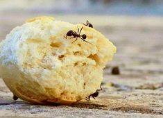 Do you have ants bothering you? We have listed some very effective ways for you to get rid of all the ants in your home or garden and take full control of your sur… Borax Cleaning, Diy Home Cleaning, Bathroom Cleaning Hacks, Deep Cleaning Tips, Household Cleaning Tips, House Cleaning Tips, Diy Cleaning Products, Oven Cleaning, Cleaning Solutions