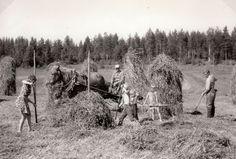 Heinäntekoa Malilan pellolla v. 1969. - Finnish horse