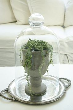 For my Flytrap. Practical decor for humidifying house plants.