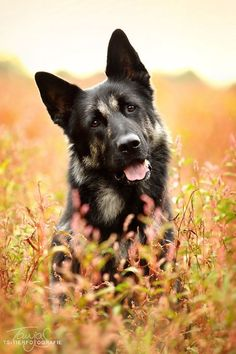 A beautiful autumn colors dog photo. It's really nice. www.myhealthypup....