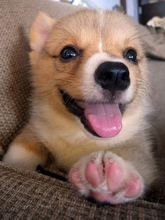 24 Reasons Why Corgis Are the Cutest Puppies