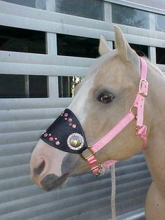 Star Struck Western Charms-Indiana-Saddle Crosses-Swarovski Crystal Conchos-Concho-Bronc Halter-Tack-Bling-Cowboy Decor Tack-Cowgir