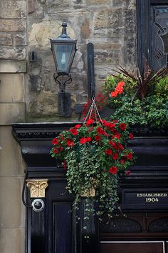 'Edinburgh in Colour' Same colour as the plant up Harrisville rd. I want a cutting of that plant. One day.