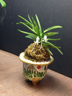 Hand made polymer clay pot for Neofinetia Falcata orchids