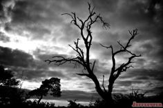 My favorite photo outside of the sunrise was the dead tree on an ominous background that I shared as the photo of the week last week.