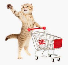 Självständiga, påhittiga och kärleksfulla - katterna har många underbara sidor som gör dem till härliga husdjur. Vi har allt du behöver för att göra ert liv tillsammans så bra som möjligt, från roliga kattleksaker och sköna klösmöbler, till praktiska ting kring t.ex. pälsvård och toalettbestyr. Och givetvis marknadens bästa kattfoder! Tips på inköpslista från Zoo.se