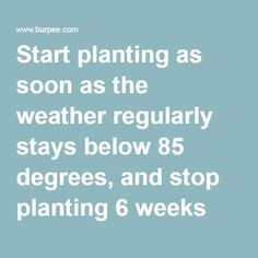 Start planting as soon as the weather regularly stays below 85 degrees, and stop planting 6 weeks before the first hard frost.