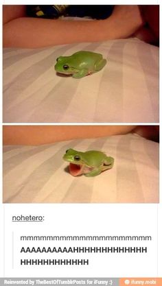 Funny Hilarious Memes Me when I realize there was homework I didn't do Funny Animal Memes, Cute Funny Animals, Funny Animal Pictures, Cute Baby Animals, Stupid Animals, All Meme, Stupid Memes, Cute Jokes, Funny Cute