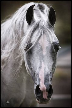 Striking horse!