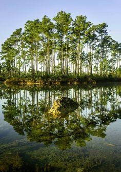 Everglades National Park #everglades #florida