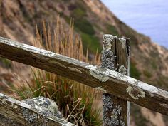 moss and lichen on an old fence   - Vintage Photograph. $14.00, via Etsy.