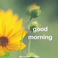 15 Good Morning Images Birthday Wishes ExpertTime to Start the Day 15 Good Morning Images Birthday Wishes Expert