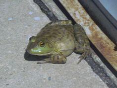 Tri Supply Bull Frog, Del City Del City, Delaware City