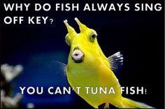 Off Key Tuna Fish Pun - funny - Jokes Punny Puns, Puns Jokes, Jokes And Riddles, Corny Jokes, Some Jokes, Stupid Jokes, Funny Jokes For Kids, Funny Jokes To Tell, Dad Jokes